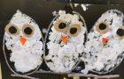 Suaimhneas Owl Babies!
